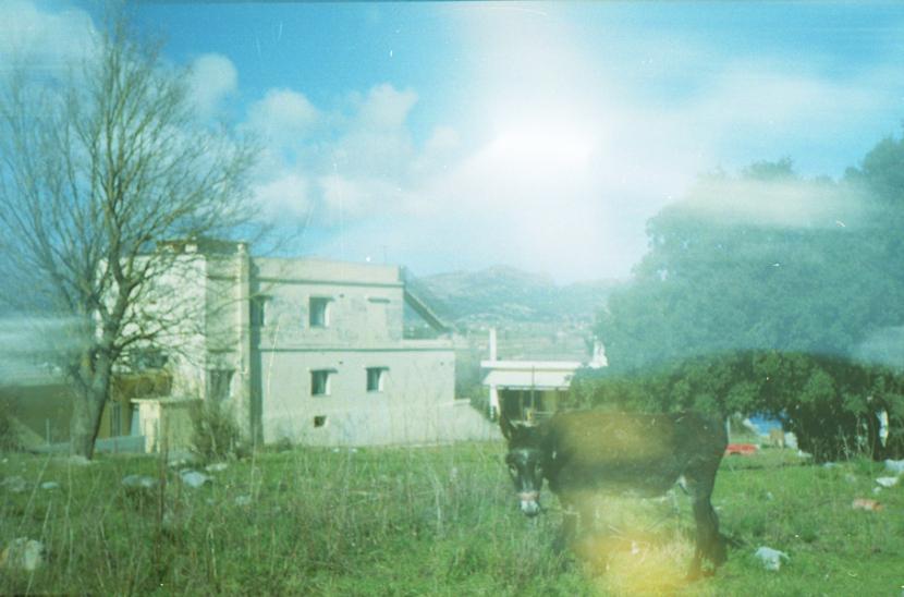 crete-donkey
