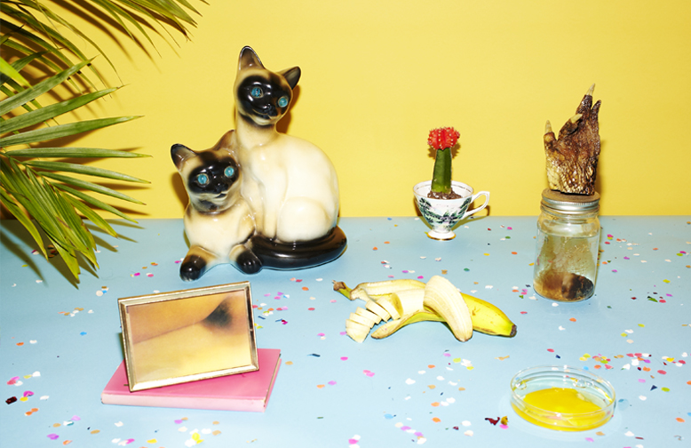 http://colleendurkin.com/files/gimgs/24_colleen-durkin-photography-still-life-color-banana-morning-still-life-cats-gators.jpg