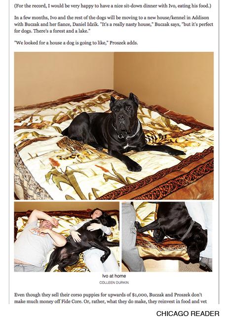 http://colleendurkin.com/files/gimgs/9_9colleendurkinphotographychicagodogshowchicagoreader2.jpg