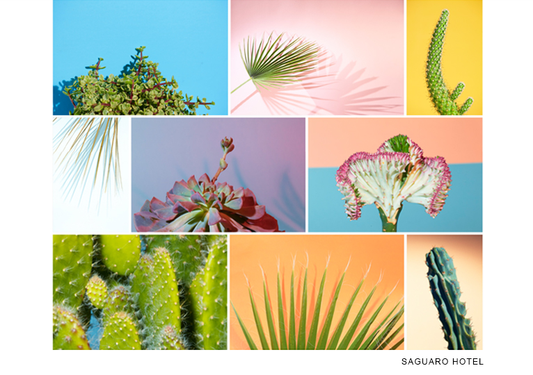 http://colleendurkin.com/files/gimgs/9_colleen-durkin-photography-saguaro-hotel-palm-springs-cactus-feature-4_v2.jpg