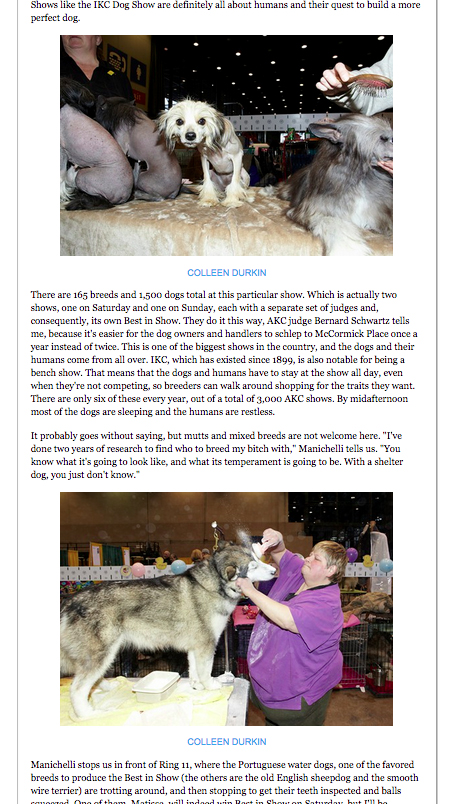 http://colleendurkin.com/files/gimgs/9_colleendurkinphotographychicagodogshowchicagoreader2.jpg