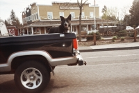 15_colleen-durkin-photography-fashion-lifestyle-fun-film-chicago-places-travel--mt-hood-oregon-dog-in-truck.jpg