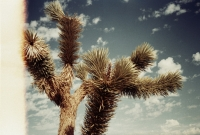 15_colleen-durkin-photography-fashion-lifestyle-fun-film-chicago-places-travel-los-angeles-cactus-desert.jpg