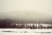 15_colleen-durkin-photography-fashion-lifestyle-fun-film-chicago-places-travel-mount-hood-oregon-forrest.jpg