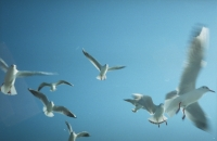 15_colleen-durkin-photography-fashion-lifestyle-fun-film-chicago-places-travel-turkey-istanbul-asia-seagulls-film-ferry.jpg