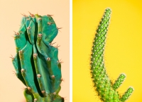 24_202020-colleen-durkin-photography-saguaro-catus-series.jpg